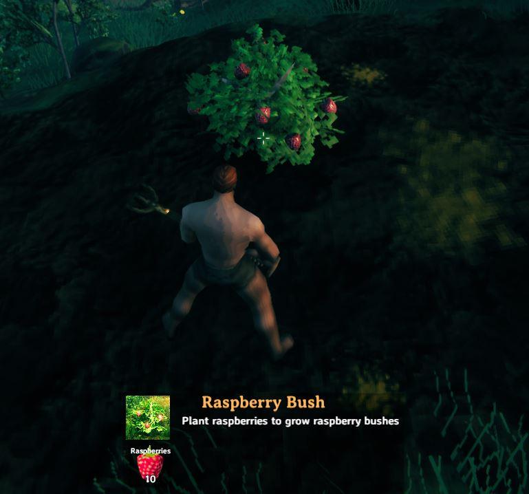 planting a raspberry bush in Valheim